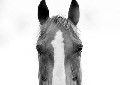 porfolio-fotos10-2000x1200-70